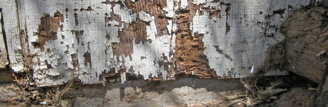 Termite Inspection Houston - Termite Damage